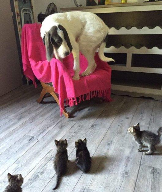 6-112860-dog-kittens-1438803469