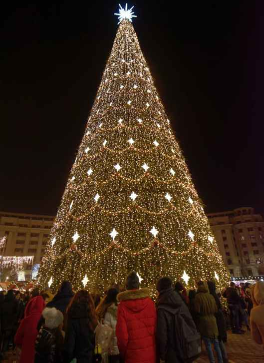 photo of huge christmas tree